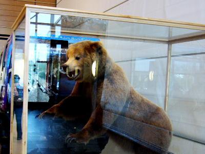 フェアバンクス空港ロビーの熊
