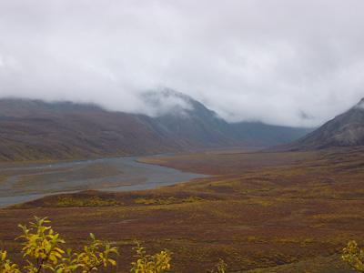 デナリ国立公園紅葉6