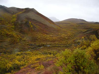 デナリ国立公園紅葉3